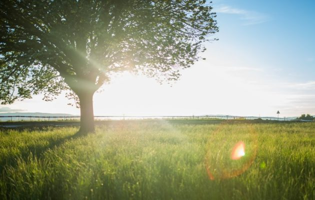 Kuvan puu ei liity juttuun vaan on kuvituskuva