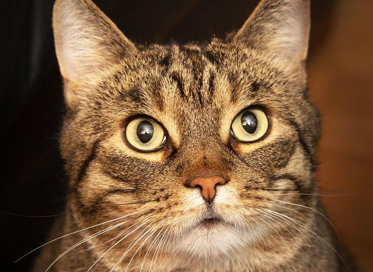 Kuvituskuva, tämä kissa ei liity juttuun.